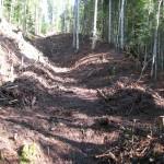 nettoyage de forêts